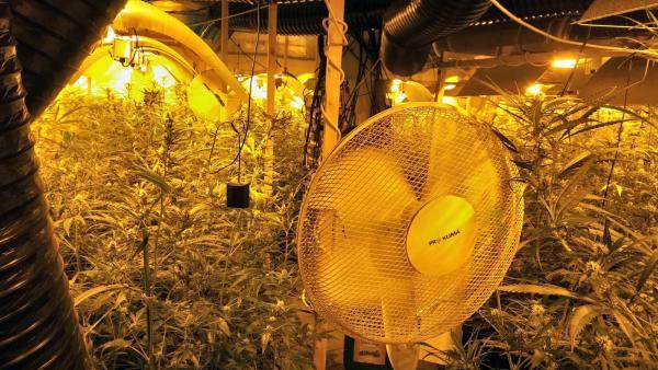 Plantación interior marihuana Catllar