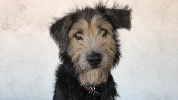 Monte, un perro de película