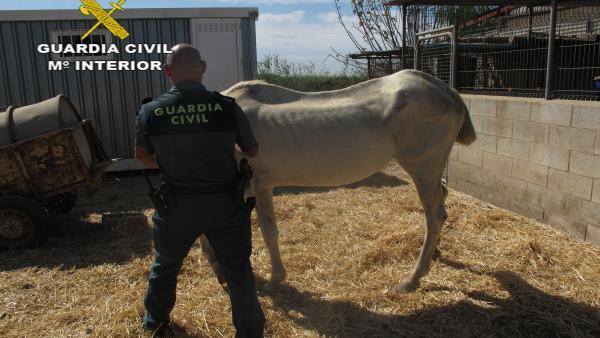 Agente de la Guardia Civil con uno de los caballos desnutridos.