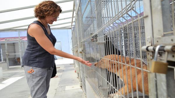 Una de las voluntarias de Volavall en una de sus visitas al Centro Canino de Valladolid.