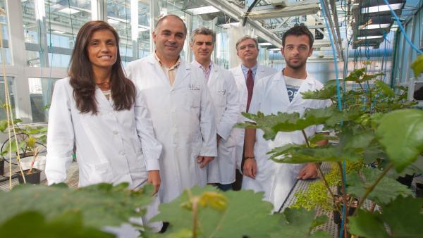 Científicos De La Universidad De Navarra Desarrollan Una Tecnología Para Fabricar Nuevos Fertilizantes