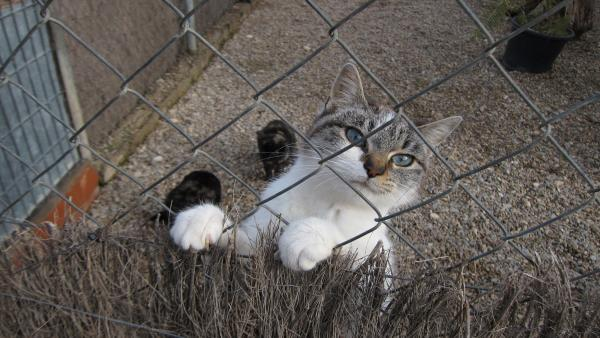 Gatos que se encuentran en el Centro Municipal de Protección Animal de Zaragoza