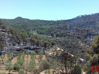 Zonas de vegetación quemadas por el fuego en La Ribera d'Ebre (Tarragona).
