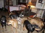Imagen de la habitación donde se encuentra parte de los perros acogidos por Chella Phillips