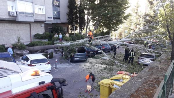 Un árbol cae sobre varios coches en la Calle Herrera Oria de la capital