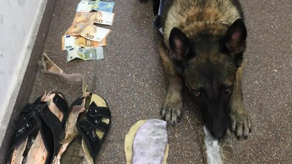 Uno de los perros que ha localizado el hachís en las sandalias.