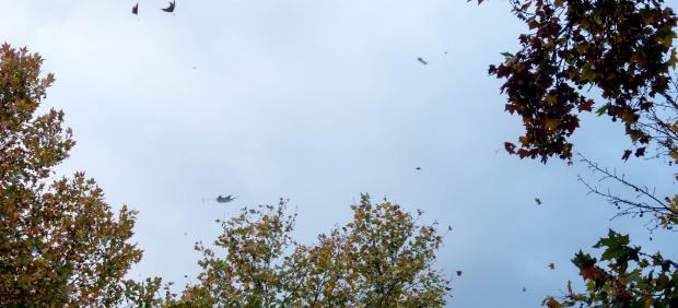 Lluvia, viento y caidas de hojas esta mañana en Sevilla.