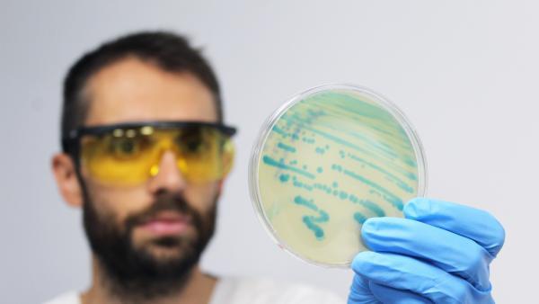 Microbiólogo trabajando en el laboratorio con listeria