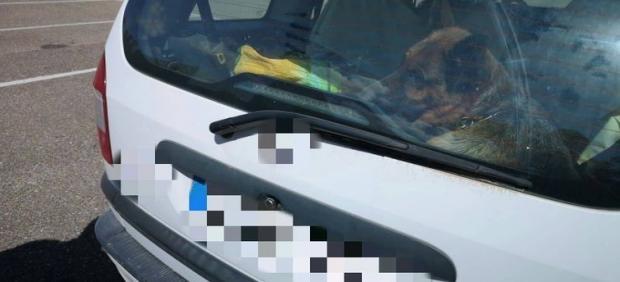 Imagen facilitada por la Policía con la perra dentro del coche del denunciado