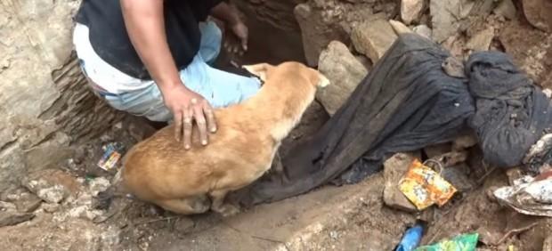 Una perra rescata a sus cachorros