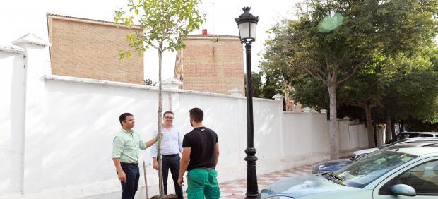 El concejal de Parques y Jardines de Marbella, Diego López, sujeta uno de los árboles que se siembran en la localidad.