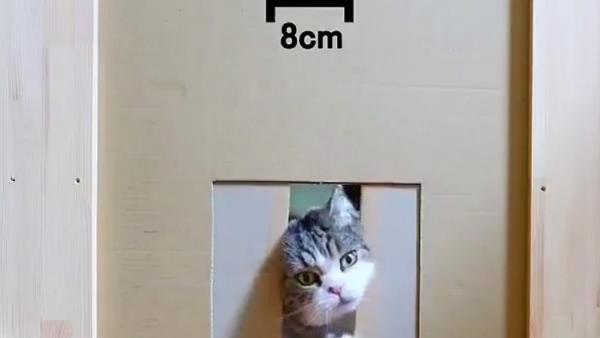 ¿Son los gatos líquidos? Este vídeo lo corrobora