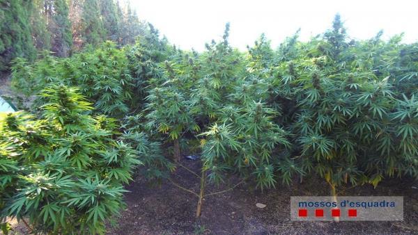 Algunas de las plantas incautadas en el registro.