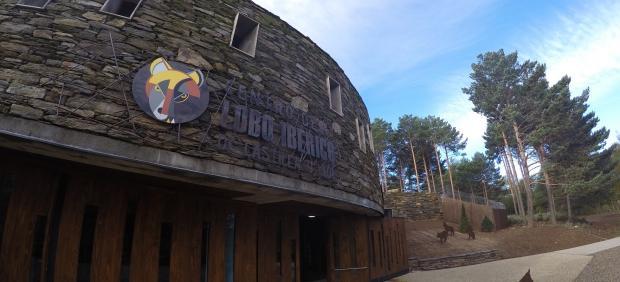 Centro del Lobo, en Robledo (Zamora), celebra el sábado una jornada de puertas abiertas para mostar a sus cuatro nuevos lobeznos.