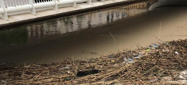 Cañas, crecida del río Segura a su paso por la ciudad de Murcia, gota fría