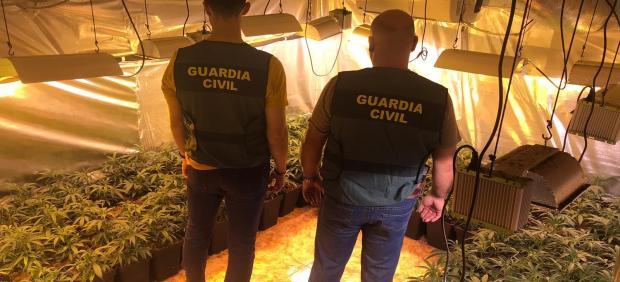 Plantaciones de marihuana intervenidas por la Guardia Civil