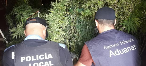 La Agencia Tributaria y la Policía Local de Santa Lucia de Tirajana intervienen una plantación de marihuana