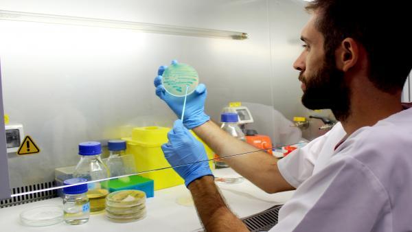 Un investigador sostiene un cultivo de listeria