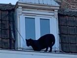 La joven pantera merodeando por los tejados franceses