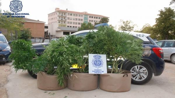 Marihuana incautada por la Policía Nacional en Cuenca