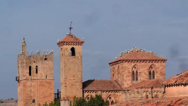 Bandada de cigüeñas en la Catedral de Sigüenza