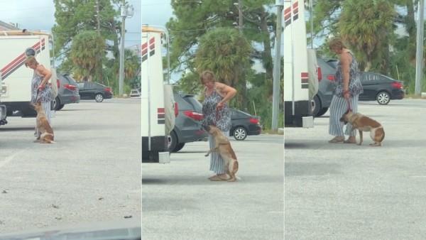 Detenida por intentar estrangular a su perro