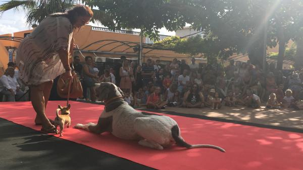 Imagen del concurso canino de SOS Animal Party