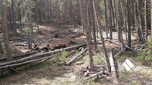 Ecologistas en Acción Cuenca alerta del riesgo de incendios en la Serranía por la falta de limpieza del monte