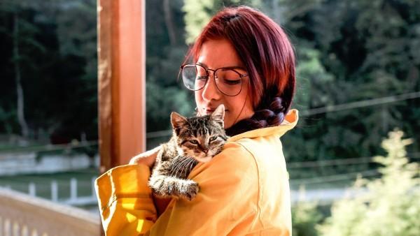 Resultado de imagen para gatos mas apegados