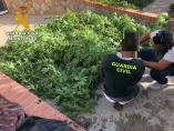 Plantación de marihuana incautada en San Pedro del Arroyo (Ávila)