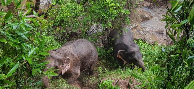 Seis elefantes mueren al caer por una cascada.