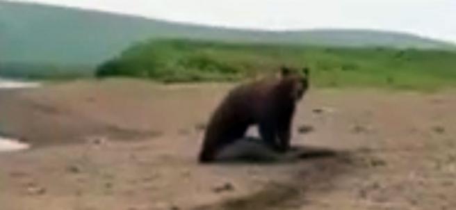Capturando una foca