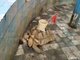El zoológico Nanning, en China, pegó una cesta sobre el caparazón de una tortuga