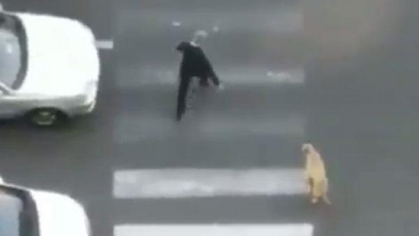 El héroe anónimo que ayuda a cruzar a un perro callejero