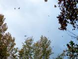Lluvia, viento y caidas de hojas