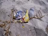 playa, contaminacion, colillas, tabaco, plastico