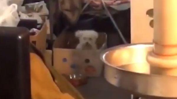 El baile más loco de un perro