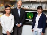 El científico español Juan Carlos Izpisúa, junto a dos miembros de su equipo.