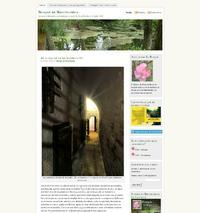 http://bosquedebrocelandia.wordpress.com